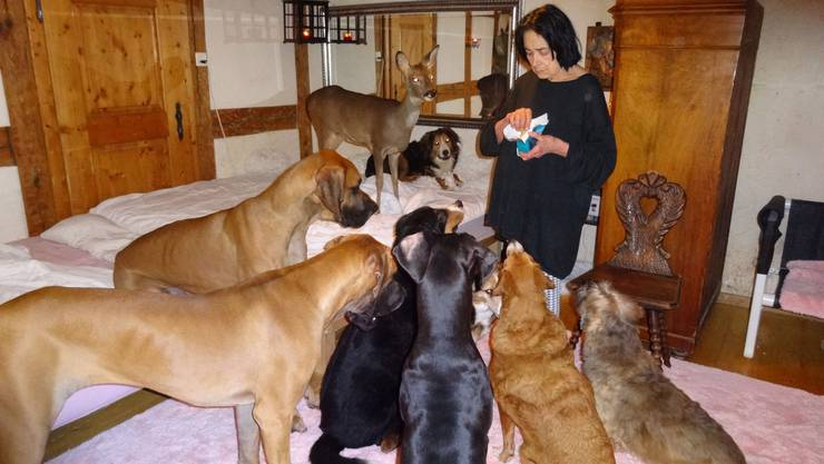 Wenn Monika Spoerlé Leckerli verteilt, ist nicht nur die Hunderasselbande ganz artig. Auch Reh Sarah will seinen Anteil.