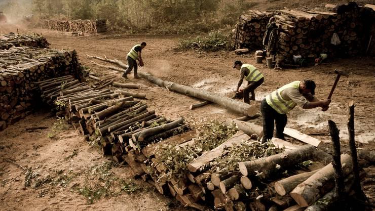Der Wald muss weichen: 70 Holzfäller machen Platz für die MineN.Pilos