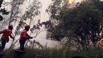 Feuerwehrleute kämpfen gegen den Waldbrand in Zentral-Portugal