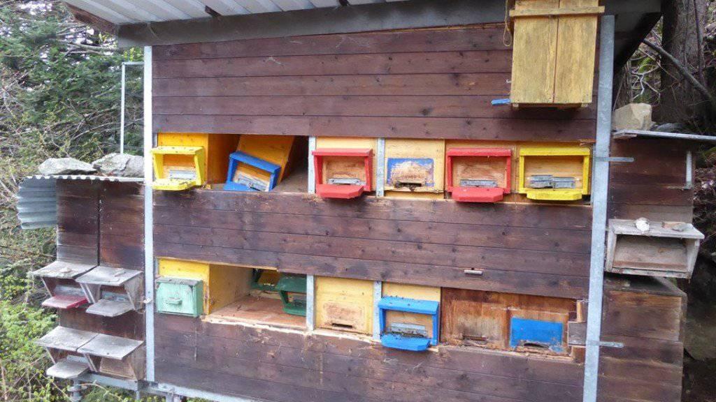 Dieser Bienenstand in der Urner Gemeinde Silenen ist von einem hungrigen Bär aufgesucht und beschädigt worden. Nun werden die Bienenvölker durch einen Elektrozaun vor dem Grossraubtier geschützt.