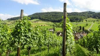 Aus den Rebbergen oberhalb von Wintersingen bezieht die Siebe Dupf Kellerei Blauburgunder-Trauben. ZVG/SIEBE Dupf Kellerei