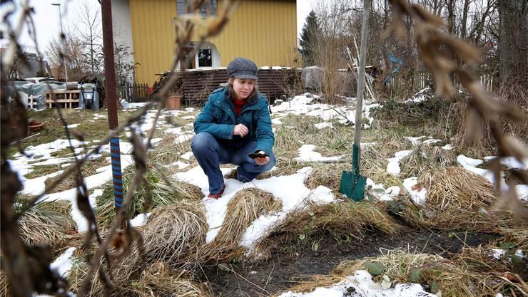 So sieht ein betroffener Garten aus: Die Teerplatten sind gehäuft und in Schichten vor allem imwestlichen Teil aufzufinden.