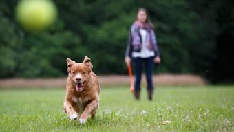 120 Franken beträgt im Kanton Aargau die jährliche Hundetaxe.
