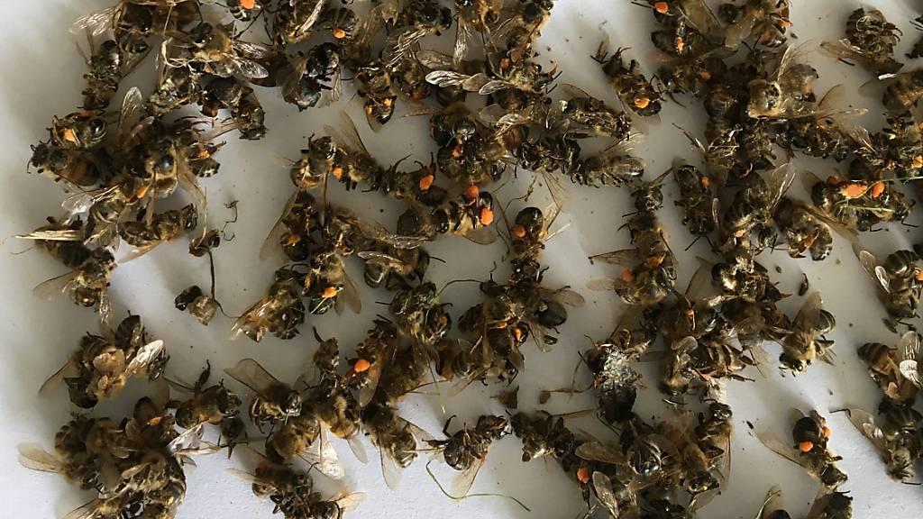 Fehlanwendungen von Insektiziden führen zu Bienensterben