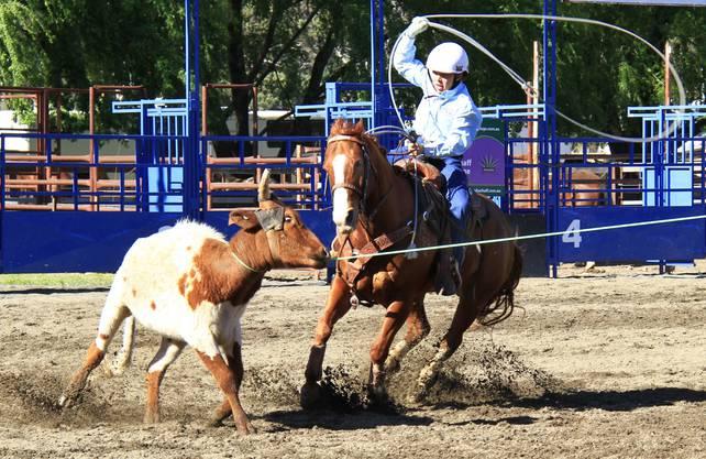 Die besten Reiter benötigen 10 Sekunden um ein Rind einzufangen.