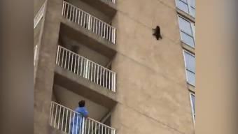 Hier stürzt der Waschbär von der Hochhausfassade – und bleibt wie durch ein Wunder unverletzt.