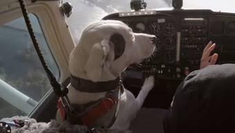 Auch Hunde können fliegen – so funktionierts.