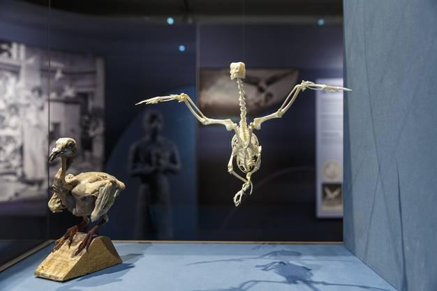 Anatomie einer Hochleistungsfliegerin