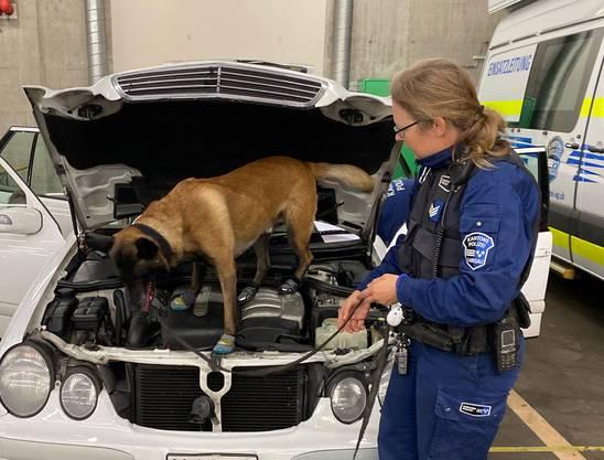 Durchsuchung eines verdächtigen Autos im Polizeikommando mit Hilfe eines Spürhundes
