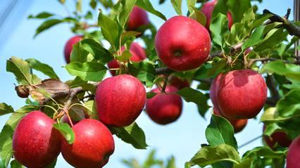 Schweizer Bauern exportieren weniger ins Ausland