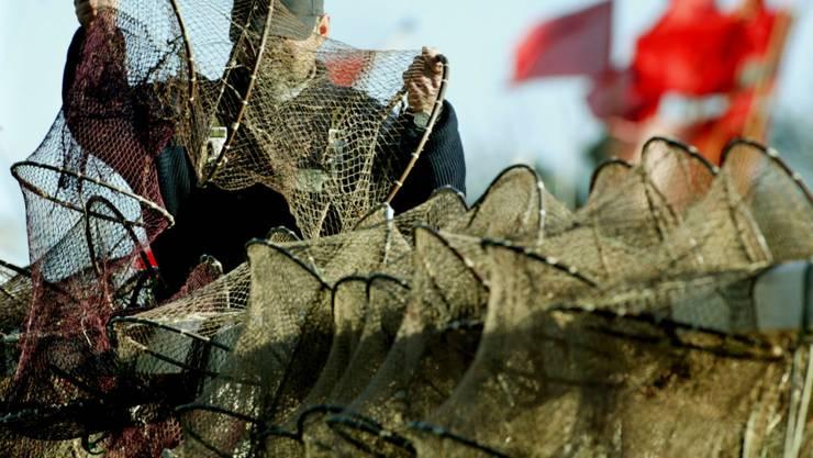 Ein Fischer legt an der Ostsee seine Reusen aus: Nächstes Jahr darf dort weniger Dorsch gefangen werden.