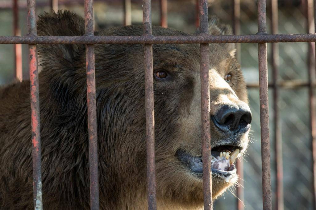 Erster Bewohner des Bärenlands