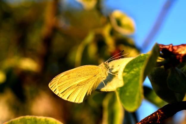 «Wenn man die Natur wahrhaft liebt, so findet man es überall schön», schreibt Lea Wohler zu ihrem Schnappschuss.