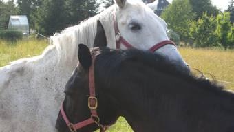 Die Gesetze für Pferde in der Landwistchaftszone sollen entschärft werden. (Archiv)