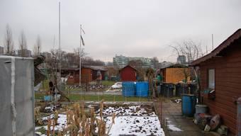 Diese Schrebergärten müssten dem Stadion weichen.