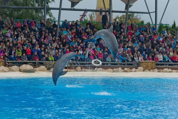 Kreuz und quer fliegen die Delfine (2)