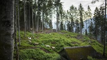 Die Wälder können die aktuelle Trockenheit noch gut verkraften. Die Trockenheit des vergangenen Jahres und der Borkenkäfer haben aber vielen Bäumen zugesetzt. (Symbolbild)