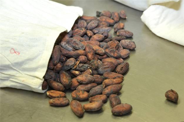 Kakaobohnen aus der ganzen Welt warten darauf, getestet zu werden.
