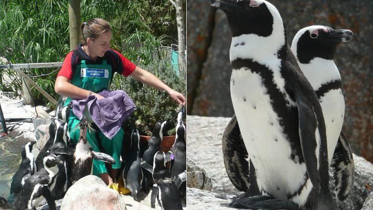 Für immer in der Auffangstation: Pinguine, die in der Freiheit nicht überleben können, werden in der Station bis zu 30 Jahre alt.