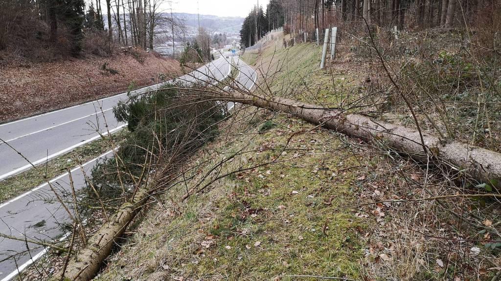 Stürmischer Wind lässt Bäume im Aargau knicken