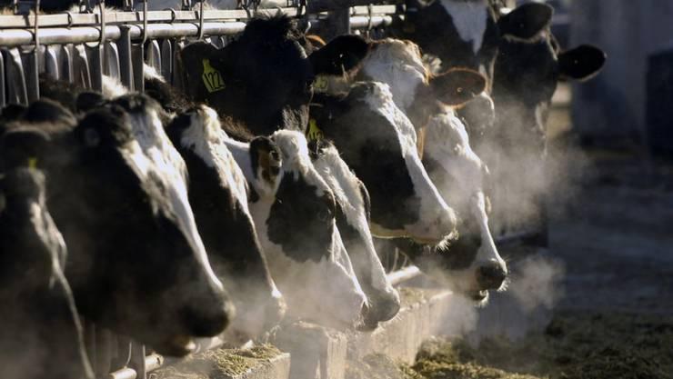 Nach der Landwirtschaft kommt auch die Energiebranche vermehrt in den Genuss von Subventionen. Aber auch andere Sektoren profitieren von den Geldspritzen aus Bern.