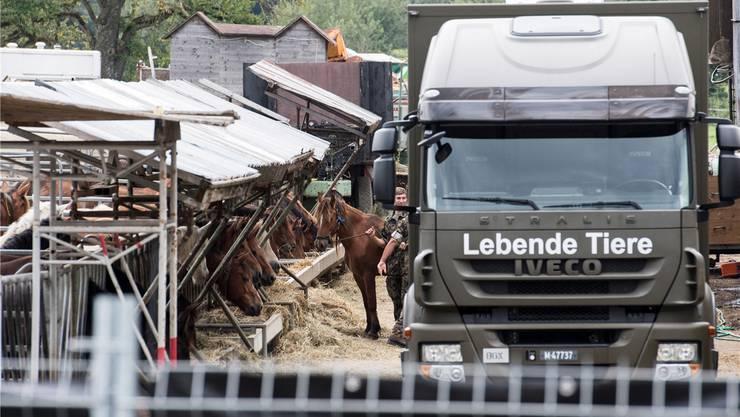 Das Militär sichert im August 2017 die Pferde auf dem Hof in Hefenhofen.