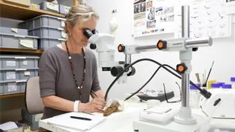 Susanne Roth arbeitet mithilfe eines Binokulars an einem der Fundstücke aus Grenchen – einer Gürtelschnalle.