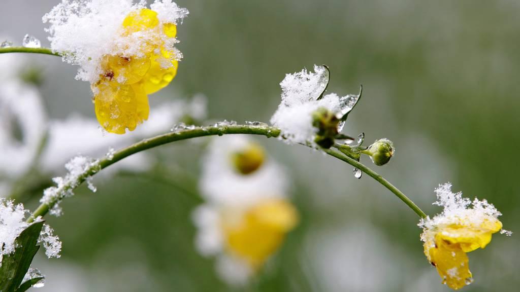 Frühlingsfrost