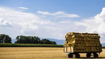 Zwischen den beiden Agrar-Initiativen, die am 23. September zur Abstimmung kommen, gibt es grosse Unterschiede. Für die Stimmberechtigen gehören die beiden Anliegen jedoch zusammen. (Archivbild)
