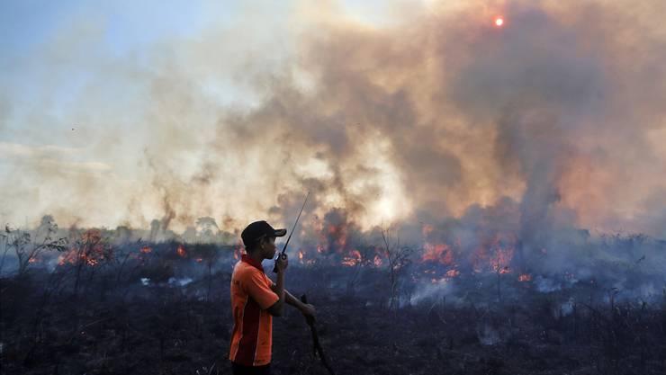 Sumatra, 2015: Torf brennt sonst nicht, weil er feucht ist. Durch den Klimawandel brennt er nun. Und verstärkt durch den CO2-Ausstoss den Klimawandel.
