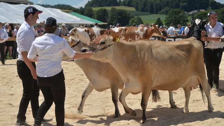 Präsentation der Kühe auf dem auf dem Hof von Hansueli und Kathrin Wyss in Brügglen,