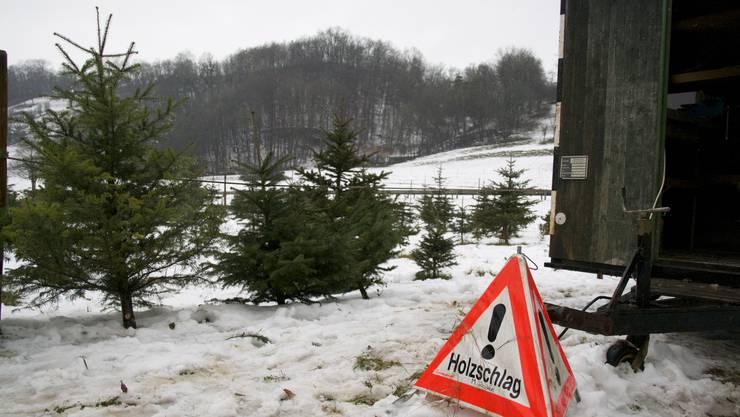 Geringe Gefahr: Am Samstagmittag ist Flaute in der «Baumschule Bözen»