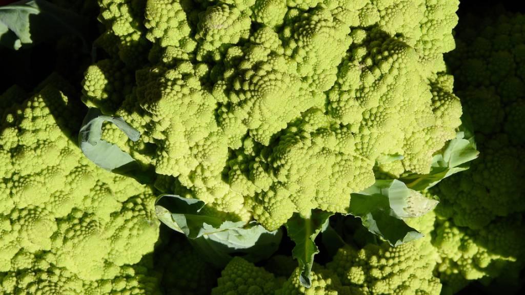 Über seinen Geschmack lässt sich streiten, aber vom Aussehen her ist Romanesco eines der schönsten Gemüse, die es gibt. Schuld daran ist ein Genfehler, wie jetzt Forscher herausgefunden haben. Die Pyramiden entstehen im nicht enden wollenden, erfolglosen Bemühen, Blüten zu bilden (Archivbild).