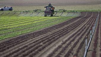 Der Einsatz von Pflanzenschutzmitteln soll reduziert werden. (Symbolbild)