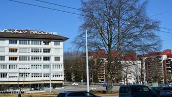 Blutbuche Buche Stadtplatz