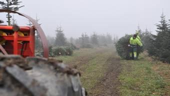 Christbaumernte mit der Agroservice