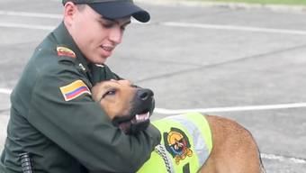 In Pereira leisten ehemalige Strassenhunde nun einen Dienst für die Gesellschaft – diese dankt es ihnen mit viel Begeisterung.