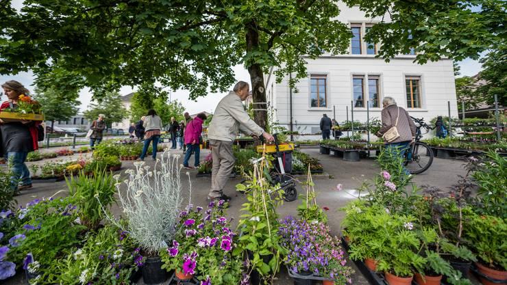 Die Pflanzenauswahl ist am 10. Pflanzentag auf dem Areal der Bezirksschule Biberist vielfältig.