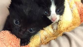 Gerettete Katzenbabies