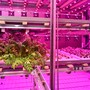 Maschinenbetriebene Gemüsefarm in Basel
