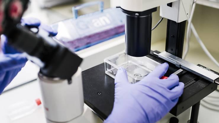 Die Medizin braucht dringend neue Antibiotika, weil Bakterien zunehmend resistent gegen die bisherigen Wirkstoffe werden. (Symbolbild)