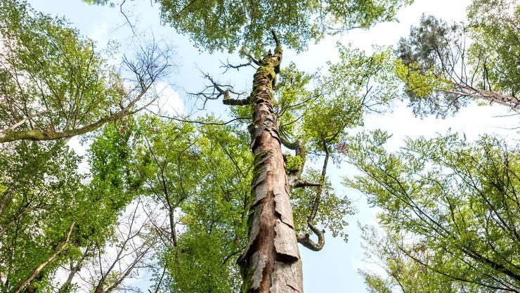 Die positiven Wirkungen desWaltschutzrogramms auf die Artenvielfalt liessen sich belegen.