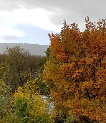 Herbsttauber