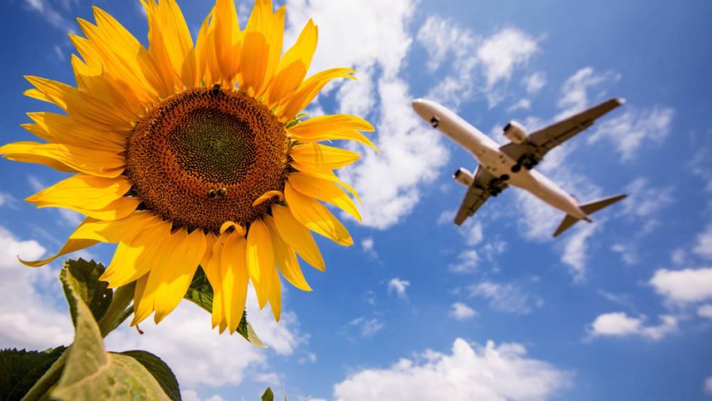 Ein Flugzeug der Lufthansa fliegt am Stuttgarter Flughafen über Sonnenblumen hinweg. In Deutschland sollen künftig Flugreisen teurer und Bahnfahrten im Fernverkehr billiger werden. Die Regierung hat Steueränderungen für das Klimapaket beschlossen. (Archivbild)