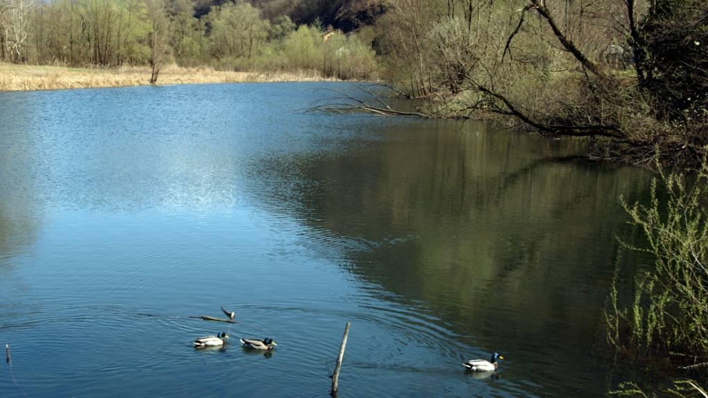 Das Deltagebiet «Bolle di Magadino» zwischen Wasser und Land.