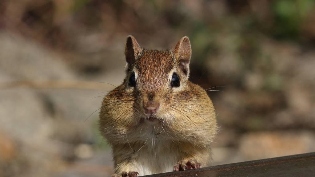 Was gilt bei Haustieren in Mietwohnungen?