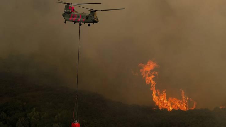 Ein Helikopter transportiert Wasser zu dem Waldbrandgebiet bei der Stadt Lakeport im Norden Kaliforniens. (Bild vom 31. Juli)
