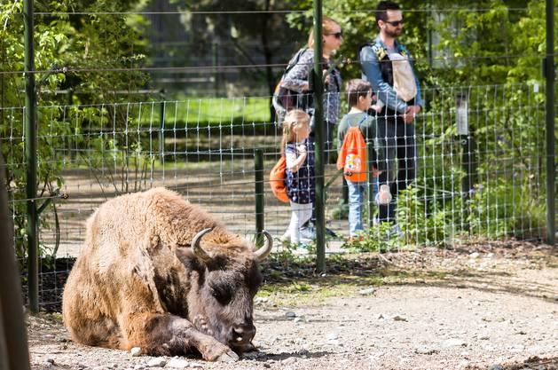 Seit dem 6. Juni ist der Tierpark Lange Erlen wieder für Besucher geöffnet. Nach zwei Wochen mit Schutzkonzept ziehen der Tierpark und der Erlen-Verein Basel eine positive Bilanz.
