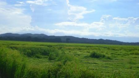 «Geseht jo us wie i de Schwiiz» so Tanja, die zum ersten Mal in ihrem Leben ein Reisfeld sieht.