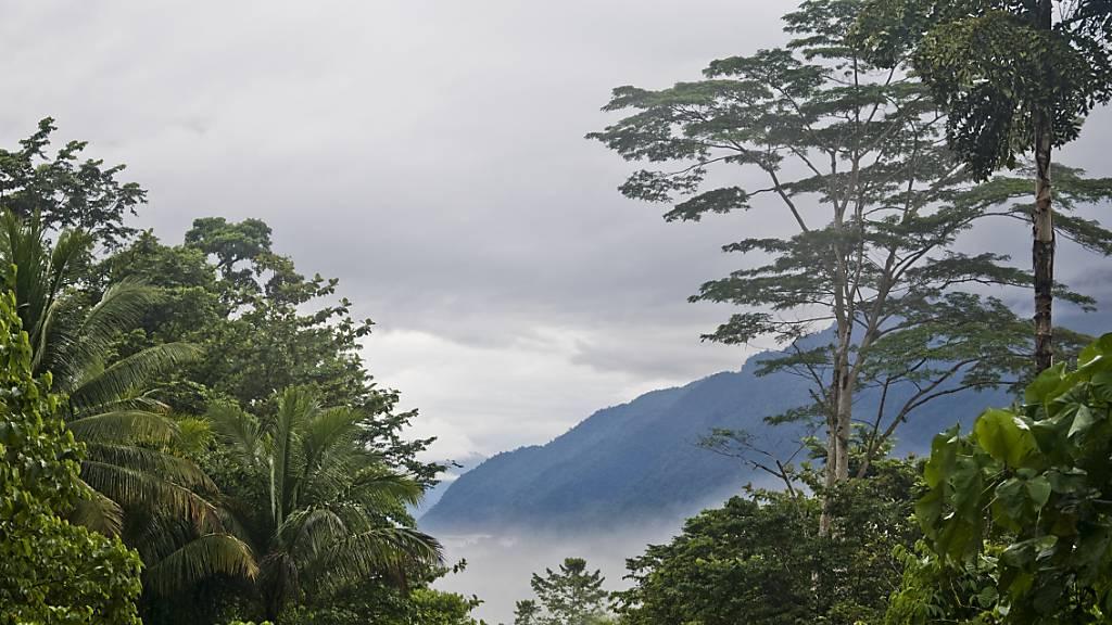 Tropische Bergnebelwälder wie der Manusela-Nationalpark auf der indonesischen Insel Seram zählen zu den artenreichsten Lebensräumen der Welt. Doch die Fläche dieser Ökosysteme verkleinerte sich in den letzten zwei Jahrzehnten.